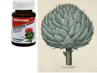 Nature's Herbs Artichoke-Power 60 Cap