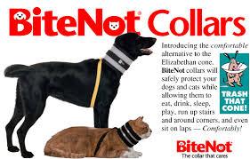 '.Elizabethan Bite Not Collar Cat (Over 10.'
