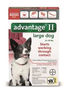 Advantage II - Dog 21 - 55# Red