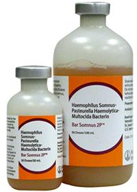 Bar Somnus 2P (Haemophilus Somnus-Mannheimia Haemolytica-Pasteurella Multocida B