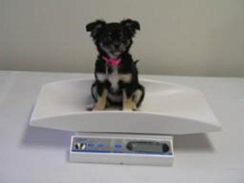 Digital Tray Scale (Pediatric) Portable W/ Removable Tray Each By Brekn