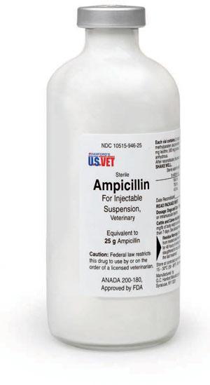 Ampicillin Trihydrate 25G 250ml By G.C. Hanford