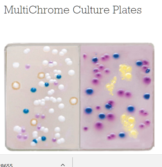 Multichrome Culture Plates Bx10 By Kacey