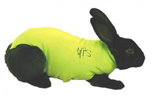 Medical Pet Shirt - Green XSmall [Rabbit] Each By Medical Pet Shirts