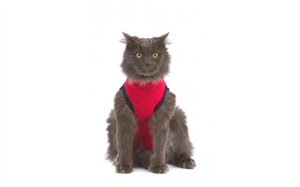 Medical Pet Shirts - Red XSmall (Cat) Each By Medical Pet Shirts