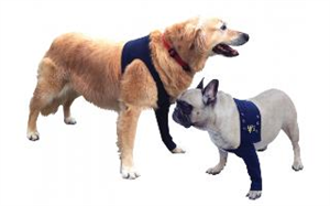 Medical Pet Shirts Protective Sleeve Taz Medium (Body 21.3-26.6 - Length 10.2