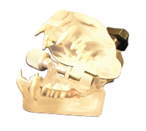 '.ANATOMICAL MODELS Canine Denta.'