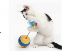 Catit Play Bee Spinning Laser Toy and Treat Dispenser By Rolf C Hagen