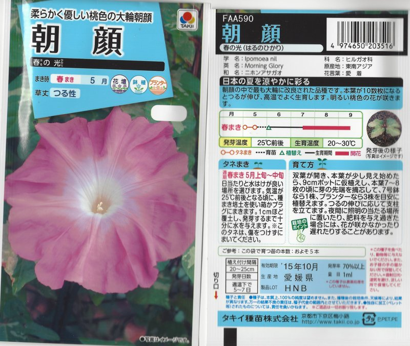 Image 1 of Japanese Morning Glory Seeds: HARU NO HIKARI, Light of Spring,  Ipomoea Nil