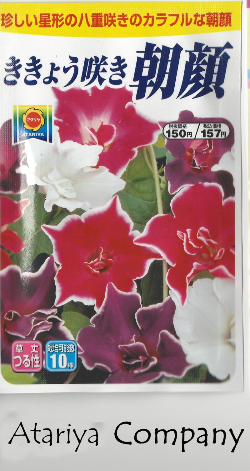 Image 1 of Japanese Morning Glory Seeds: Kikyouzaki Mix, Platycodon / Picotee Mix