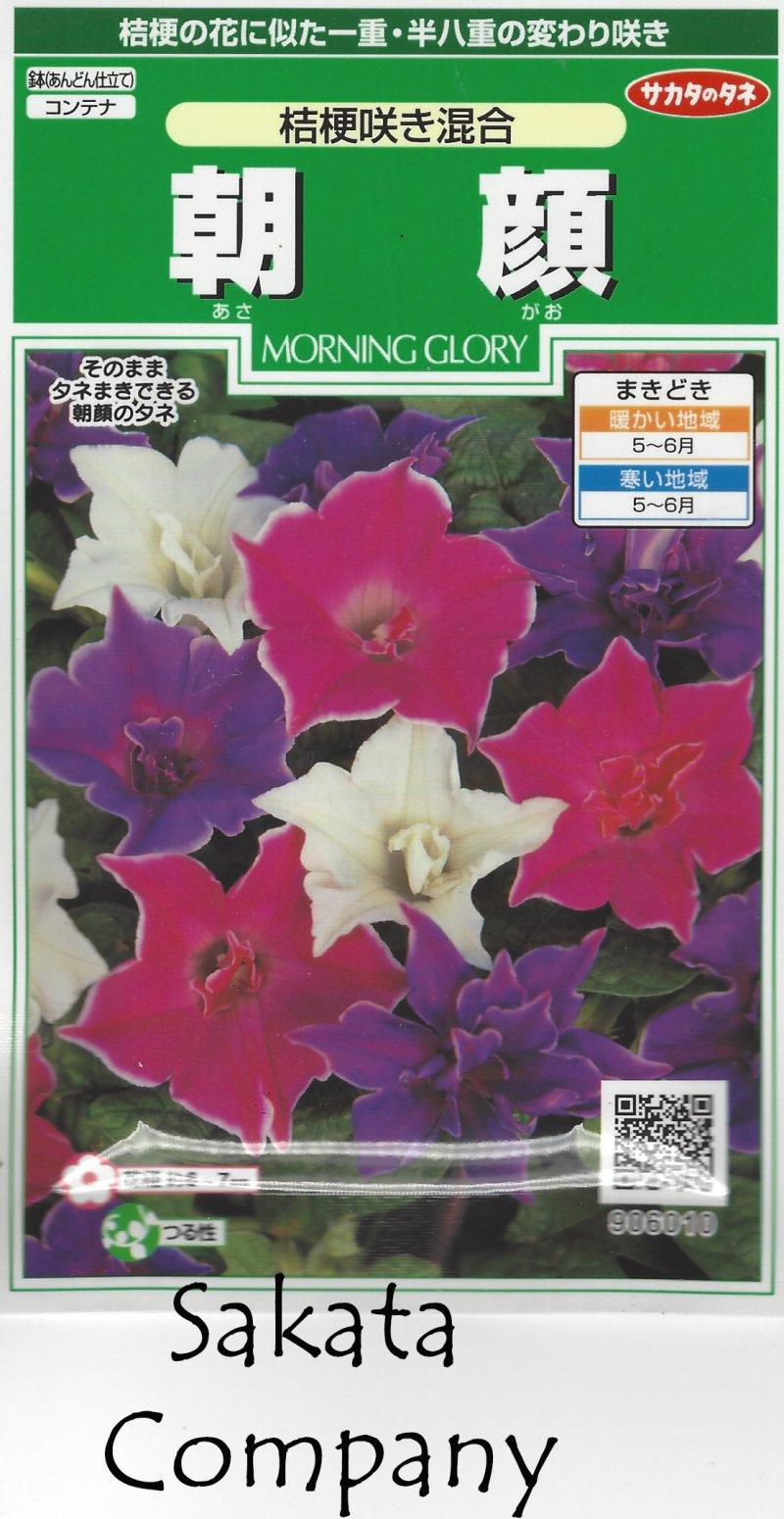 Image 4 of Japanese Morning Glory Seeds: Kikyouzaki Mix, Platycodon / Picotee Mix