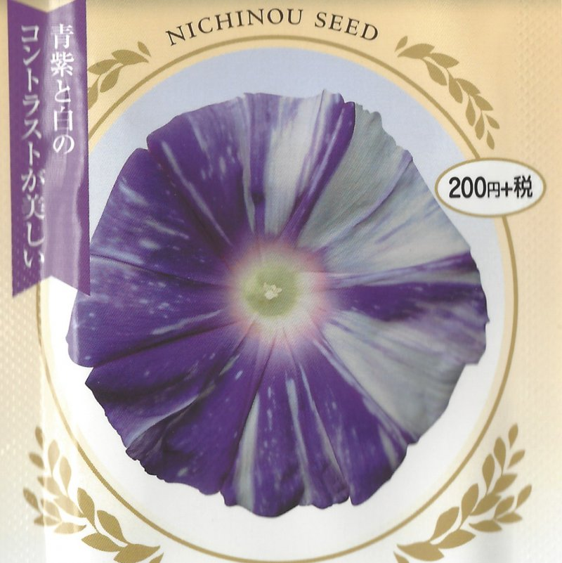 Image 0 of Murakumo, ''Gathering Clouds'' , Japanese Morning Glory Seeds Ipomoea Nil