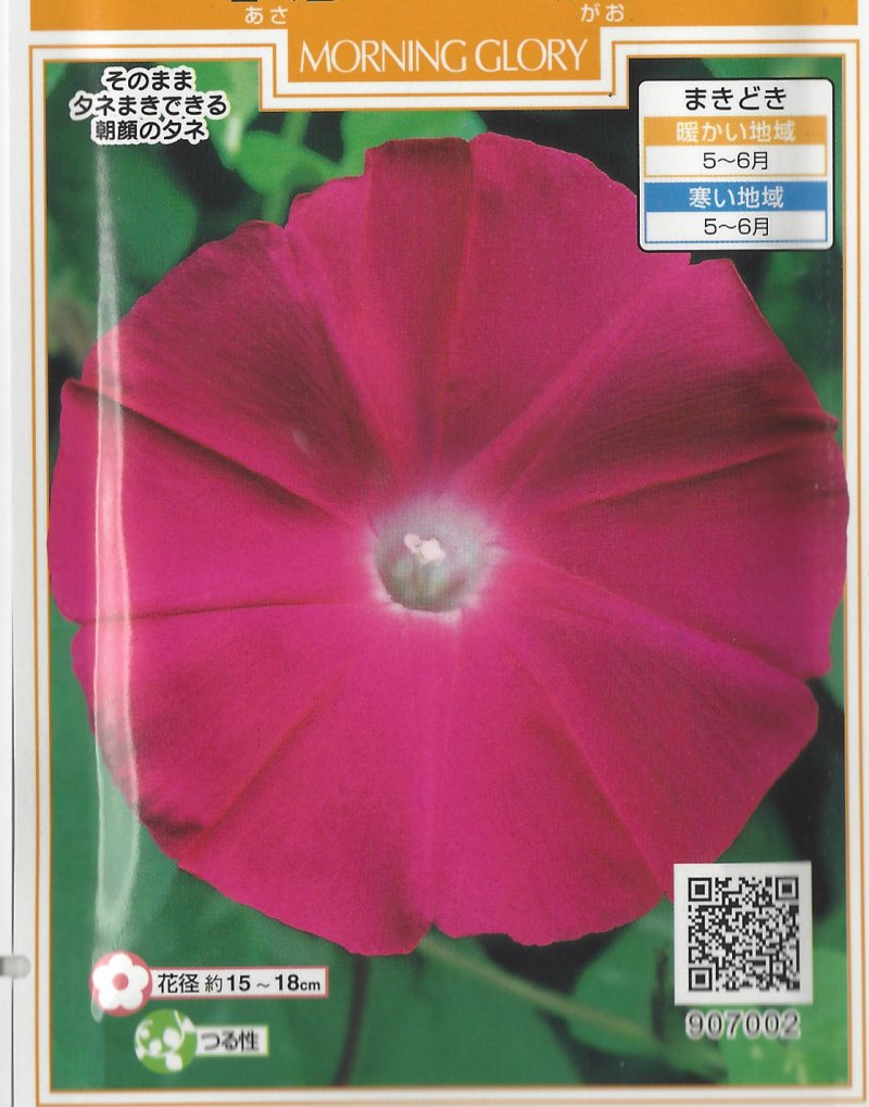 Hama No Kagayaki - Brillliance of the Beach Japanese Morning Glory Seeds
