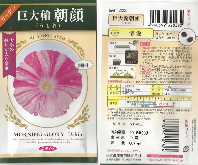 Image 1 of Japanese Morning Glory Seeds: Ushio  'Tide'  Large Pink/white striped blooms