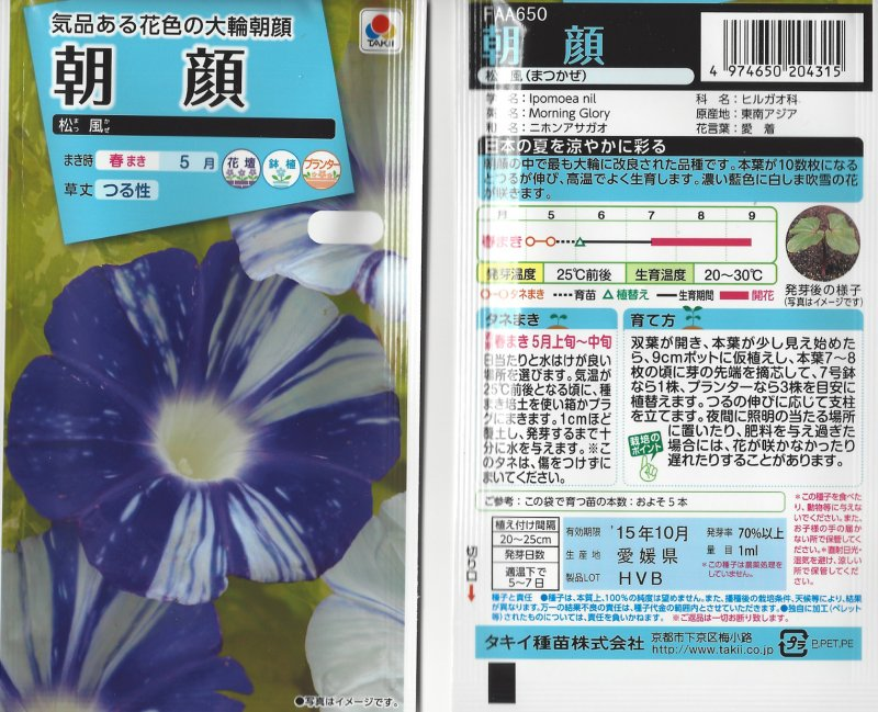 Image 1 of Japanese Morning Glory: Matsukaze, Wind in the Pines Purple blooms,white stripes
