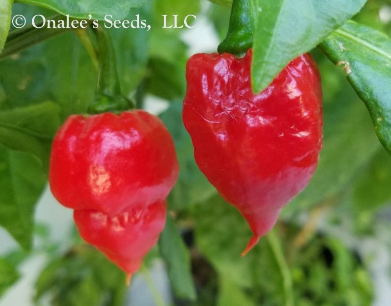 Red Carolina Reaper, Hottest Pepper in the World, Capsicum Seeds (12+ Seeds)