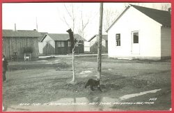 Houghton Lake Mi Petersons Resort Bear Cubs Tree RPPC Postcard