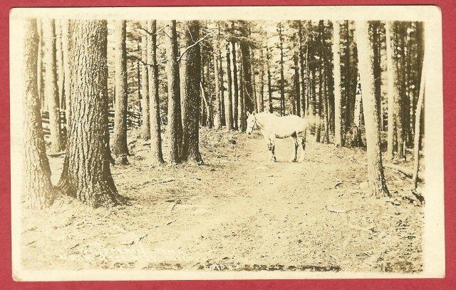 Image 0 of Rose City Mi Postcard Whispering Pine Trail Horse 1916 RPPC