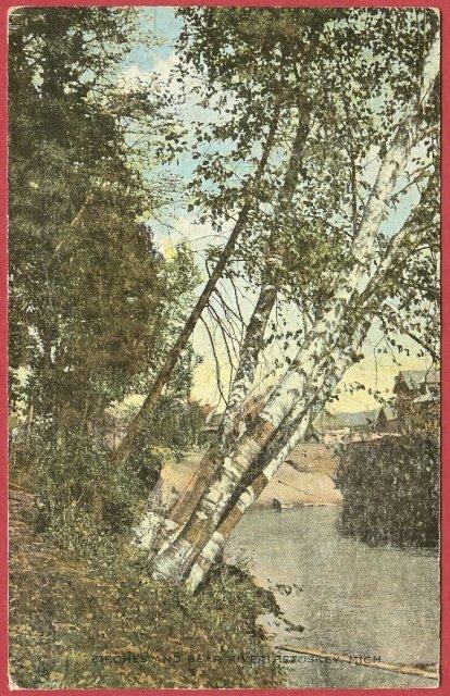 Birches, Bear River, Petoskey, Mi. , Postcard