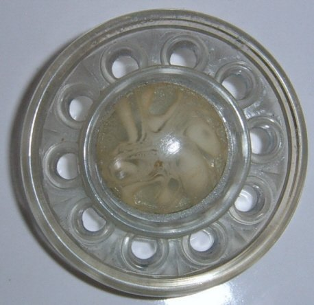 Large Pierce Celluloid Button