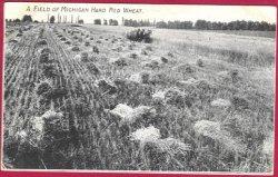 Jackson Mi Isbell Seed Growers Ad Postcard