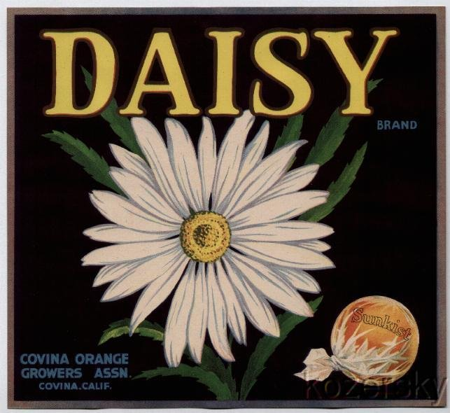 Daisy Brand Orange Crate Label