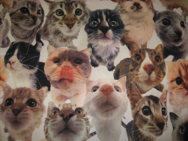 Cat fleece crate blanket curiously looking at camera handmade 29X36
