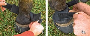 This overlapping does not compromise the integrity of the gaiter. When properly tightened, it should be difficult to fit a finger between the pastern and the top of the gaiter. 